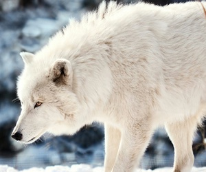 animals, beautiful, and nature image