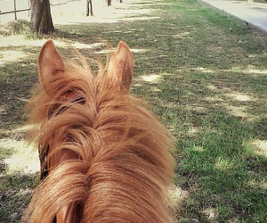 horse, outside, and riding image