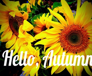 fall, sunflowers, and hello autumn image