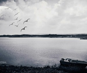 birds, boat, and Darkness image