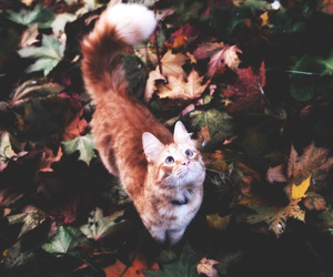 cat, fall, and grunge image