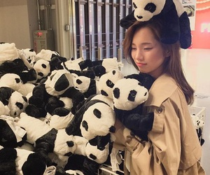 asian, korean, and panda image