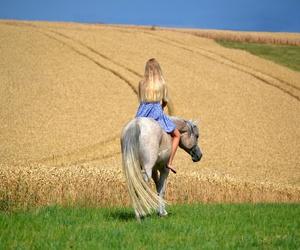 pferd, reiten, and sommer image