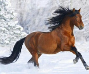 gallop, pferd, and winter image