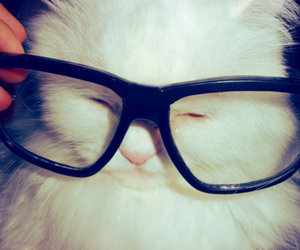 animal, cat, and glasses image