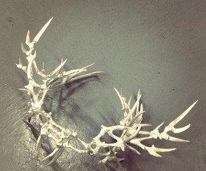 antler, bone, and crown image