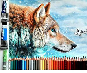 drawing, beautiful, and wolf image