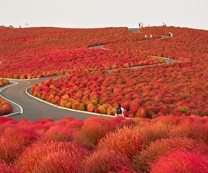 japan, red, and autumn image