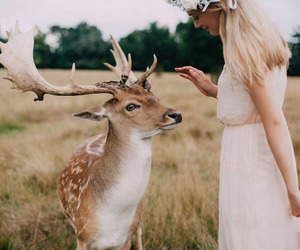 city, deer, and nature image