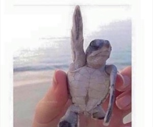 school, funny, and turtle image