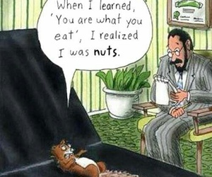 funny, nuts, and squirrel image