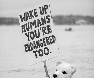 endangered, animals, and humans image