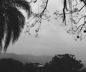 b&w, day, and nature image