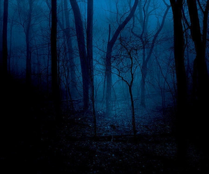 forest, blue, and dark image