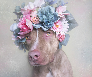 dog, flowers, and photography image