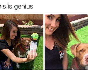 dog, funny, and genius image