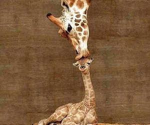giraffe, love, and kiss image