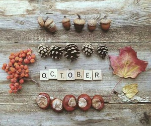 acorn, autumn, and rain image