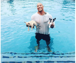Dwayne Johnson and dwayne johnson puppy image