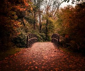 autumn, november, and trees image