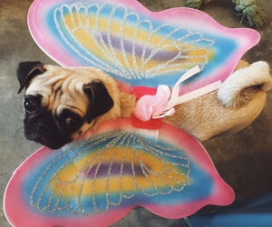 butterfly, pug, and puglife image