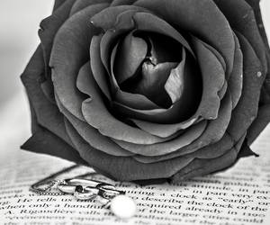 black and white, book, and heart image