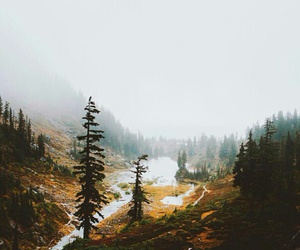 alone, forest, and loneliness image