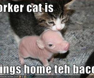 funny, kitten, and bacon image