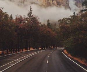 fog, forest, and road image