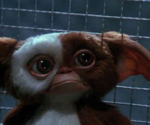 gremlins and gizmo image