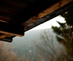 rain, nature, and autumn image