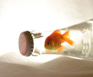 fish, bottle, and water image