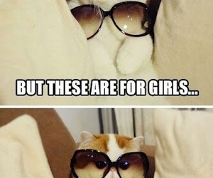 cat, funny, and fabulous image