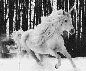 unicorn, horse, and snow image