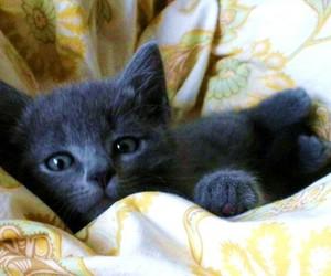 animal, cat, and kitt image