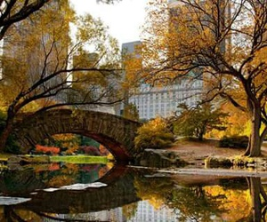 autumn, nyc, and Central Park image