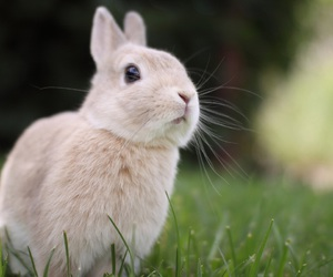 animals, rabbits, and cute image