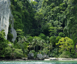 nature, tropical, and green image