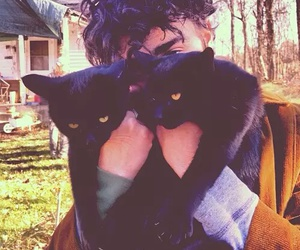 black, cats, and grunge image