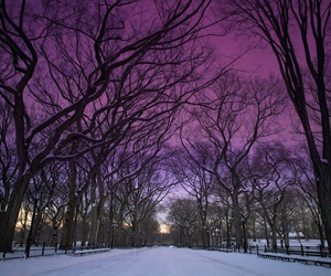 Central Park, new york, and ny image