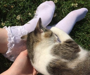 cat, girl, and hand image