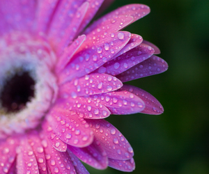 dewdrops and flower image
