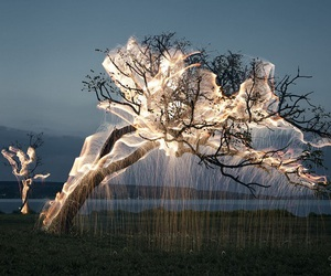 tree, light, and nature image