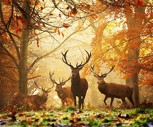 autumn, tree, and animals. image