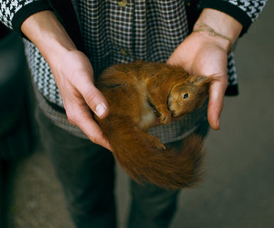 squirrel, animal, and boy image