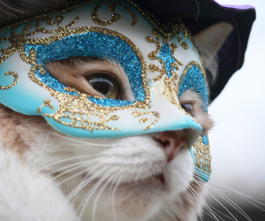 cat, mask, and kitten image