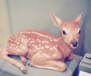 fawn image