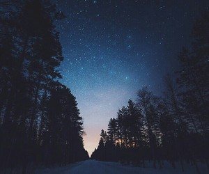 forest, night, and stars image