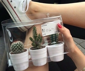 cactus and ikea image