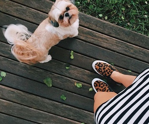 dog, fashion, and indie image